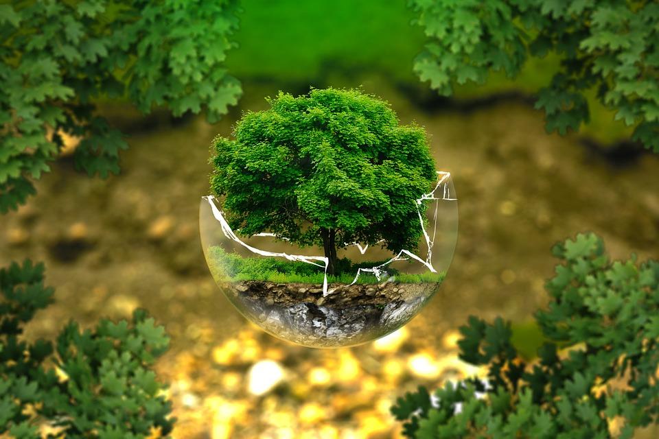 Vers l'extinction de la Terre dû à un environnement dégradé!
