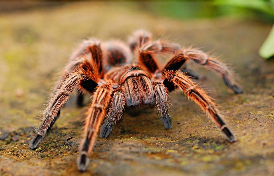 Existent-ils des médicaments contre l'arachnophobie?
