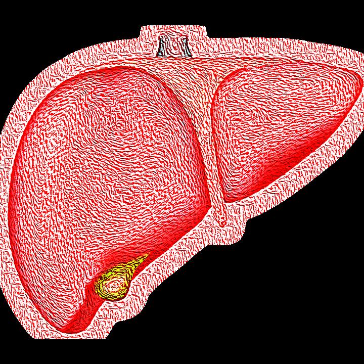 Le foie, les symptômes d'intoxication et quelques causes